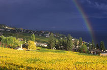Rainbow over Vineyard by Danita Delimont