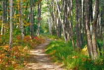 Jessup trail in Acadia National Park by Danita Delimont