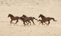 Group of running wild horses on the Namib Desert by Danita Delimont
