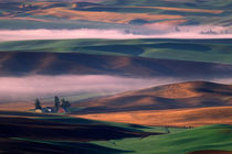 Steptoe Butte view of fog and white barn in green and brown Palouse hills by Danita Delimont