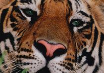 Bengal Tiger Portrait by Danita Delimont