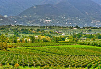 The shores of Lake Garda are home to a thriving wine region by Danita Delimont