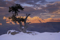 Sunset on the south rim; juniper trees; winter von Danita Delimont
