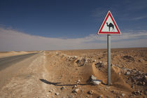 Oil Pipeline road with camel crossing sign by Danita Delimont