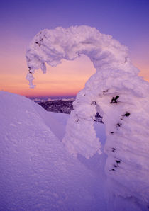 Snowghost in the Whitefish Range at Twilight in Montana von Danita Delimont