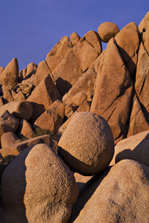 Sunset on the boulders in Jumbo Rocks by Danita Delimont