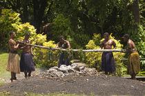 Fiji by Danita Delimont