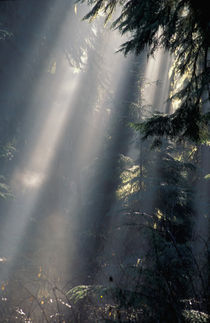Sun rays through mist by Danita Delimont