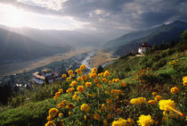 Panoramic view of beautiful Paro Valley with flowers and Paro Dzong von Danita Delimont