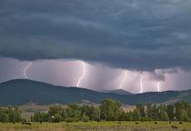 Montana by Danita Delimont