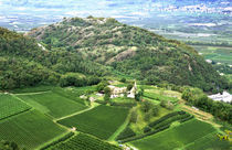 A vineyard near Mezzocorona grows grapes to make Teroldego wine von Danita Delimont