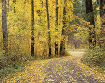 Road through trees with fall color by Danita Delimont