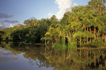 Amazon River tributary by Danita Delimont