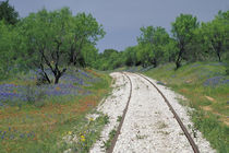 Blue bonnets and abandoned rails by Danita Delimont
