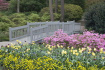 And varied spring flowers along a garden path by Danita Delimont