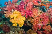 Rainbow Reef in Taveuni von Danita Delimont