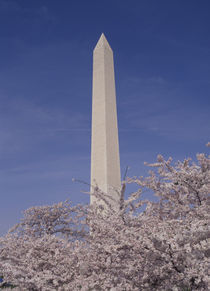 Washington Monument by Danita Delimont