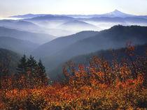 View of Mount Hood with wild huckleberry bushes in foreground von Danita Delimont