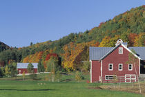 Red Barn and fall foliage von Danita Delimont