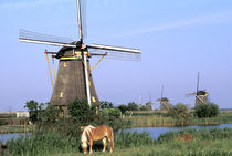 Kinderdijk windmills and horse by Danita Delimont
