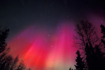 Curtains of pink and red Northern Lights above central Alaska von Danita Delimont