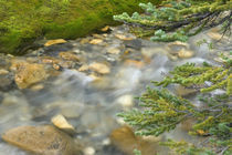 Rapidly flowing stream and pine branches by Danita Delimont