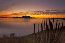 The sunrise over Isla Danzante in the Gulf of California from near Loreto Mexico von Danita Delimont