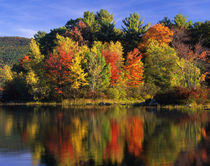 Trees in autumn color reflecting in Lake Kanasatka von Danita Delimont