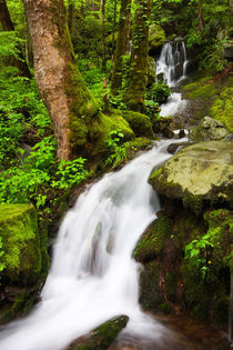 USA; Tennessee; Great Smoky Mountain NP; Cascade at Tremont von Danita Delimont