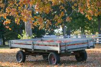 Pumpkin Wagon / Autumn von Danita Delimont