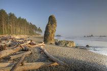Shoreline and Seastacks von Danita Delimont