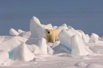 Arctic Alaska by Danita Delimont