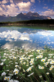 Hektor Lake with wildflowers and reflection by Danita Delimont