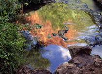 Redrock Reflection von Danita Delimont