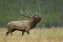Wyoming by Danita Delimont