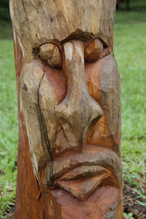 Handcarved tree with face by Danita Delimont