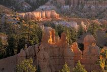 Bryce Canyon NP by Danita Delimont