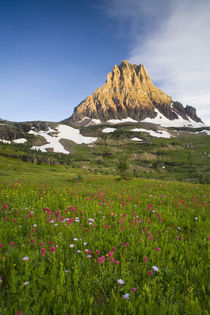 Wildflowers in the Hanging Gardens below Mt Clements at Logan Pass in Glacier National Park Montana von Danita Delimont