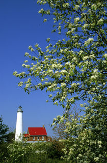 Tawas Lighthouse with wild cherry trees in bloom by Danita Delimont