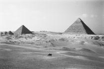 Giza Pyramids von Danita Delimont