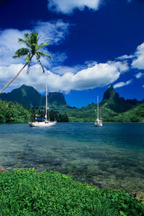 Private yachts anchored in Opunohu Bay on the island of Moorea in the Society islands of French Polynesia by Danita Delimont