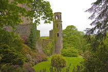 The infamous Blarney Castle hosts the Blarney Stone which is said to give you the gift of gab if you kiss the stone by Danita Delimont
