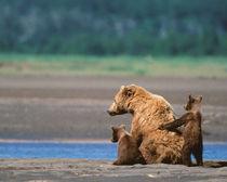 Katmai National Park von Danita Delimont