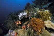 Coral reef von Danita Delimont