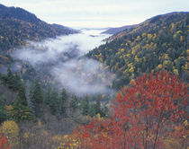 Autumn view of foggy valley from Morton Overlook by Danita Delimont