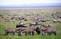 Tanzania Africa by Danita Delimont