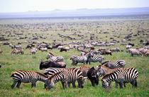 Tanzania Africa von Danita Delimont