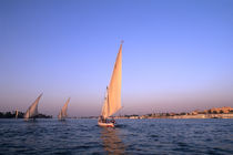 Beautiful sail boats riding along the famous Nile River in Cairo Egypt von Danita Delimont