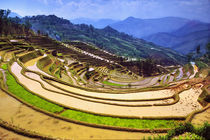 Flooded Laohu Zui rice terraces near Panzhihua Village by Danita Delimont