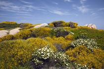 Capo Testa landscape von Danita Delimont